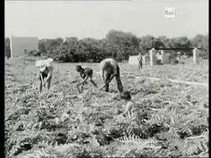 Piatti tipici pugliesi - Sapori di Puglia 1967 - Rai Storia