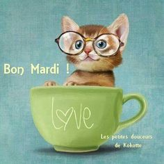 New funny cats illustration mornings Ideas I Love Cats, Crazy Cats, Cool Cats, Bon Mardi Humour, Image Chat, Small Cat, Here Kitty Kitty, Fat Kitty, Cat Drawing