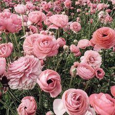 San Diego flower farms | Jenny of Margo & Me