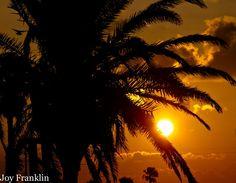 Palm Tree sunset at Quintana Beach