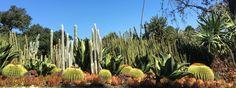 Part Pre-New Zealand Adventure at Huntington Botanic Garden – TheGardenGeneralist New Zealand Adventure, New Zealand Travel, Huntington Library, Botanical Gardens, Houseplants, Cactus Plants, Container Gardening, Around The Worlds, Journey