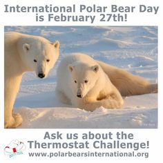 Climate change continues to reshape the Arctic, and with it, the habitats of its wildlife. This year on International Polar Bear Day, you'll have a variety of ways to show your support for our. Seal Hunting, Polar Bears Live, Polar Bears International, North Pole Expedition, Sea Ice, Educational Programs, Endangered Species, Save Energy, Climate Change