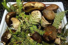 Funghi porcini della nostra terra