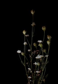 muted flowers