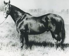 road when he began his career as a sire. Three Bars was inducted into the Hall of Fame in 2004. Learn more about the AQHA Hall of Fame inductees at http://aqha.com/en/Foundation/Museum/Hall-of-Fame/Hall-of-Fame-Inductees.aspx