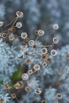 Cider House, Fotografia Macro, Seed Pods, Autumn Day, Shades Of Blue, Blue Brown, Flower Power, Beautiful Flowers, Seeds