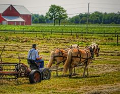 Horse drawn farm equipment, the old-fashioned way... love it!