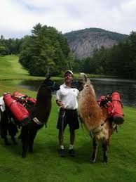 Image result for llama caddying Golf, Activities, Image, Wave, Polo Neck