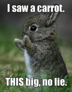 I saw a carrot this big