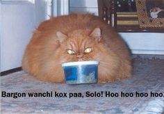 Love the cat Star wars humor. lol