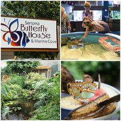 It's Summer Year Round at Sertoma Butterfly House   Visit Sioux Falls
