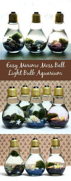 These easy Marimo moss ball DIY light bulb aquariums make a great home for tiny Japanese Marimo moss balls and are super cute as homemade gifts or DIY party favors! More