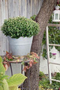 Herbstdekoration fuer Hof und Garten - 15
