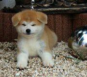 Machiko 2,5 months old