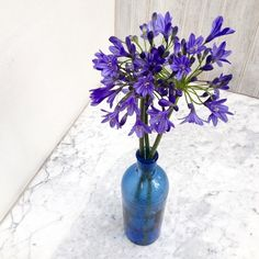 A Bunch for the Weekend - Triteleia. Styling and photography © Ingrid Henningsson for Of Spring and Summer.
