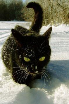 Black Cat in the Snow なんかいいぞ。