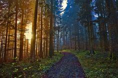 Forêt de Dame Othenette , Canton of Neuchatel. Switzerland. Illuminations. No. 2390.