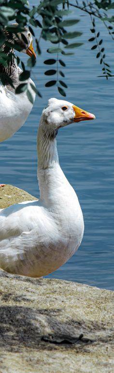 Photography, Animals, Photograph, Animales, Animaux, Fotografie, Photoshoot, Animal, Animais
