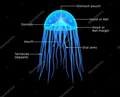 Jellyfish, Pouch, Neon Signs, Stock Photos, Poster, Medusa, Sachets, Posters, Hip Bag
