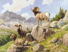 Sheep Paintings, Wildlife Paintings, Wildlife Art, Animal Paintings, Sheep Art, Bear Art, Nature Animals, Zoo Animals, Western Landscape