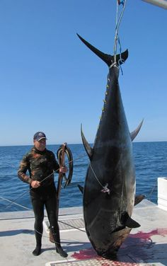 1000 fish - Bing Images