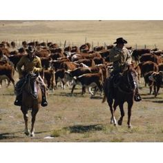*Cattle ranch