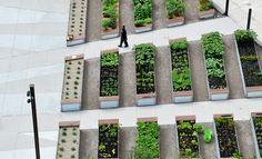 Lafayette Greens Urban Garden 144 Lafayette ⊚ pinned by www.megwise.it #megwise