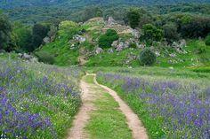 Filitosa est un site archéologique d'une grande importance du fait de la présence de monuments mégalithiques. Situé dans la vallée fertile de Taravo, entre Propriano et Ajaccio, il est le témoin de 8 000 ans d'histoire et attire chaque année des milliers de visiteurs.