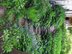kitchen garden walkway - I want to do this out back near the hose, using plants that soak up water in the shade. Garden Paths, Garden Landscaping, Herb Garden, Garden Steps, Landscape Design, Garden Design, Hosta Gardens, Woodland Garden, Garden Images