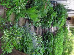 Shady walkway - hosta, ferns, bleeding hearts, stones