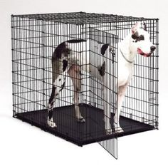 $25.27 MidWest Large Dog Crate Divider Panel - MidWest Starter Series Lrg Dog Crate Divider Panelw http://www.amazon.com/dp/B002B9NECE/?tag=pin2pet-20