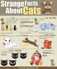 Facts about Cats, Good to know!