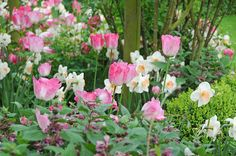 Easy to realize, this fresh and classic border combines pastel tulips with…