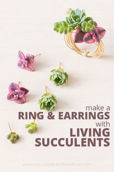 Make your own living succulent earrings and ring • Succulents and Sunshine