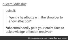 Penryn & Raffee, though i think Raffee would better at showing affection than Penryn My Tumblr, Tumblr Funny, Funny Memes, Hilarious, Infj, Writing Tips, Writing Prompts, Mbti, My Sun And Stars