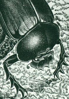 Detail  Scarabs.   April 1935   Wood Engraving