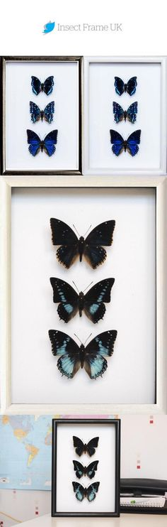Framed Out of the blue defines an unexpected emotion we love it Charaxes laodice Charaxes etesipe Charaxes tiridates Framed your gift for ever Perfect Image, Perfect Photo, Love Photos, Cool Pictures, Butterfly Frame, Handmade Frames, Light Reflection, Corner, Collections