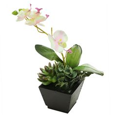 Found it at Wayfair - Artificial Orchid with Succulent Desk Top Plant in Pot