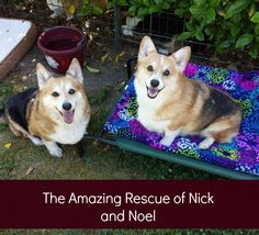 It Takes a Nation: The Amazing Rescue Story of Nick and Noel - Babble Pets. This is such a heartwarming story!
