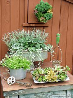 Dish and Pain Garden Containers-low budget container gardening Container Plants, Container Gardening, Gardening Tips, Plant Containers, Kitchen Containers, Flower Containers, Organic Gardening, Dream Garden, Garden Art