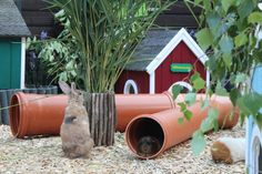 Kaninchendorf – Langohrwelt Kaninchendorf – Langohrwelt Rabbit village - long-eared world Rabbit village - long-eared world Discount Pet Supplies, Cat Supplies, Animals Of The World, Animals And Pets, Rabbit Enclosure, Rabbit Crafts, What Kind Of Dog, Young Animal, Cute Funny Animals
