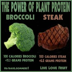 Animal vs Plant Protein - What's the Difference?