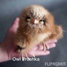 Owl Proshka hand made by Artist . Sold.  Продан. #owl #toy #teddy #сова #совенок The link in my Bio