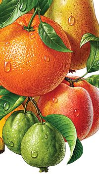 Illustration Artists, Food Illustrations, Botanical Illustration, Beautiful Fruits, Beautiful Flowers, Fruit Photography, Fruit Painting, Coloured Pencils, Fruit Art