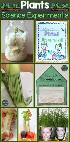 plants Kindergarten simple - Plants Science Experiments & Teaching How Plants Grow - Lessons for Little Ones by Tina O'Block Plant Experiments, Plant Science, Science Experiments Kids, Science Lessons, Garden Crafts For Kids, Science Projects For Kids, Science For Kids, Children Crafts, Science Fun