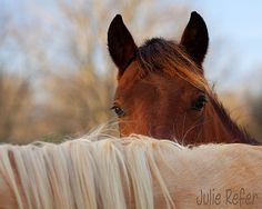 Horse Photography Equestrian Art Print by jrefer on Etsy
