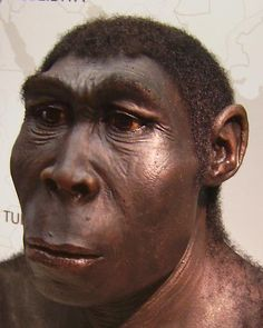 A model of Homo erectus from Museum of Archaeology, Herne, Germany.