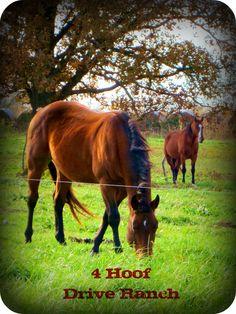 4 Hoof Drive Ranch Stallions