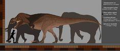 From featherweight to Heavyweight by Paleop on DeviantArt Dinosaur Balloons, Dinosaur Art, Tyrannosaurus Rex, Prehistoric Animals, In Ancient Times, Extinct, Moose Art, Deviantart, Future