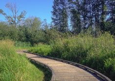 Mercer Slough Nature Park Trails - 6 miles, also birding?